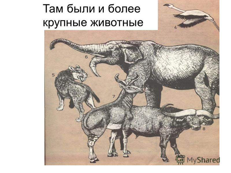 Там были и более крупные животные