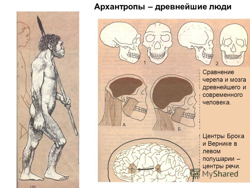Сравнение черепа и мозга древнейшего и современного человека. Центры Брока и Вернике в левом полушарии – центры речи. Архантропы – древнейшие люди