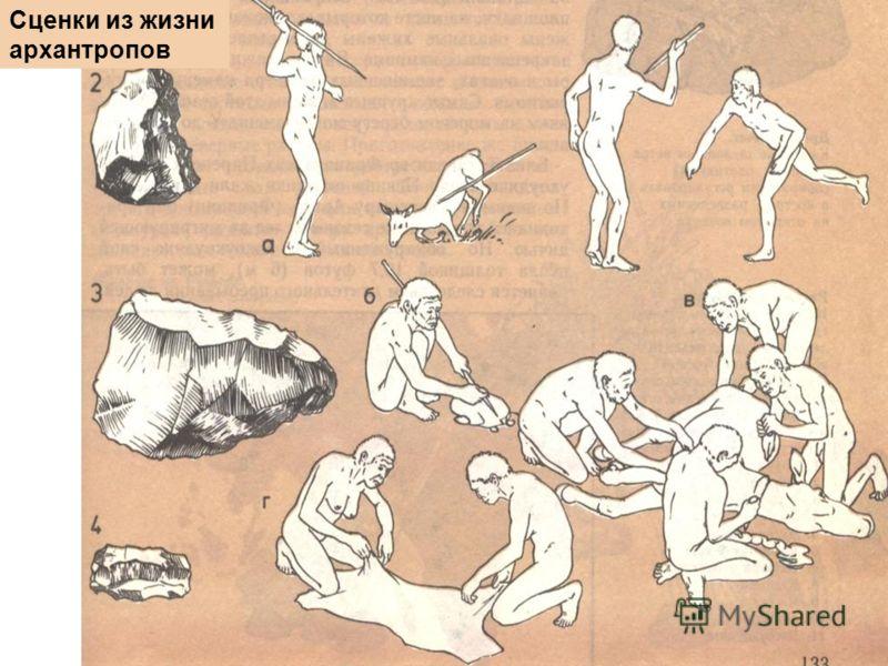 Сценки из жизни архантропов