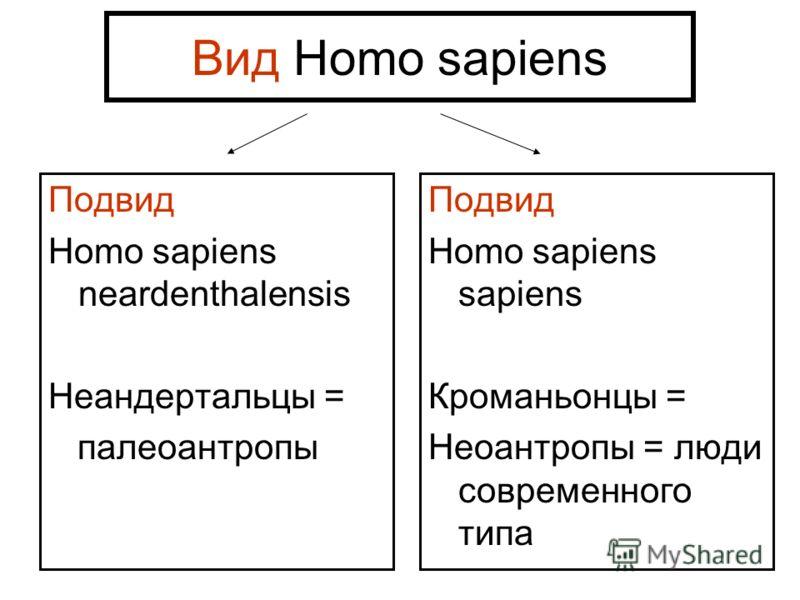 Вид Homo sapiens Подвид Homo sapiens neardenthalensis Неандертальцы = палеоантропы Подвид Homo sapiens sapiens Кроманьонцы = Неоантропы = люди современного типа