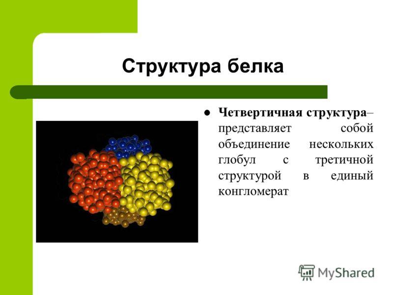 Структура белка Четвертичная структура – представляет собой объединение нескольких глобул с третичной структурой в единый конгломерат