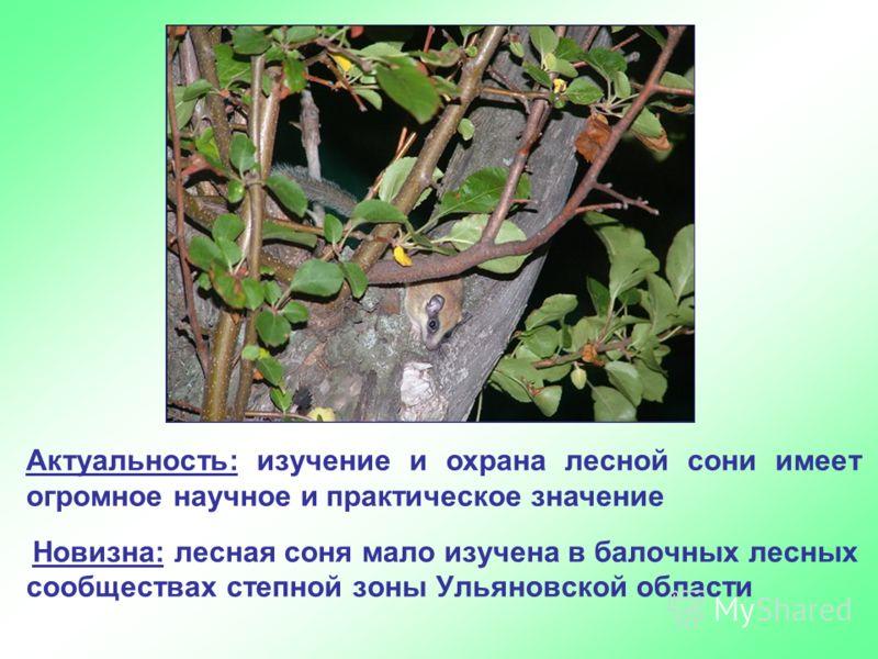 Новизна: лесная соня мало изучена в балочных лесных сообществах степной зоны Ульяновской области Актуальность: изучение и охрана лесной сони имеет огромное научное и практическое значение