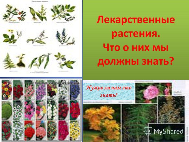 Лекарственные растения. Что о них мы должны знать? Нужно ли нам это знать?