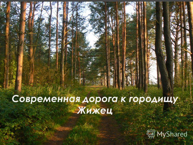 Современная дорога к городищу Жижец