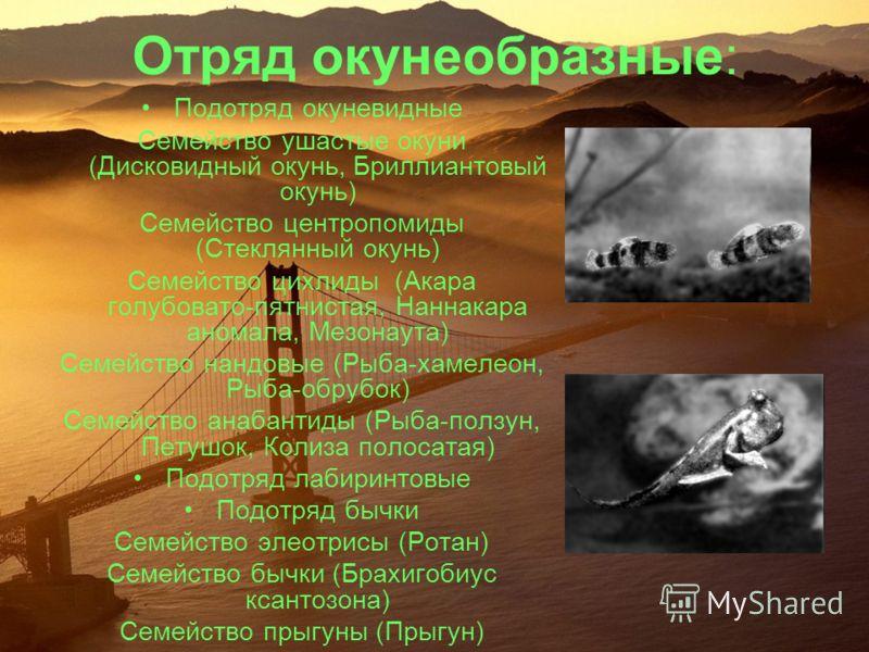 Отряд окунеобразные: Подотряд окуневидные Семейство ушастые окуни (Дисковидный окунь, Бриллиантовый окунь) Семейство центропомиды (Стеклянный окунь) Семейство цихлиды (Акара голубовато-пятнистая, Наннакара аномала, Мезонаута) Семейство нандовые (Рыба