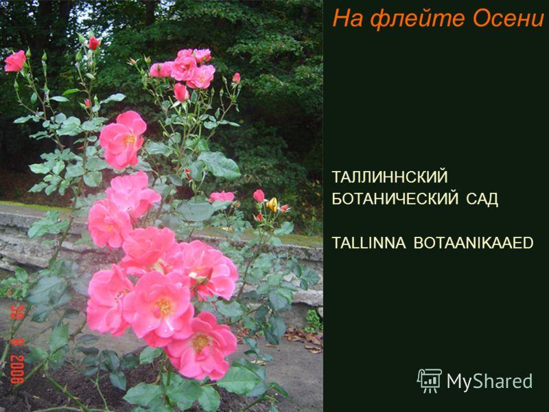 На флейте Осени ТАЛЛИННСКИЙ БОТАНИЧЕСКИЙ САД TALLINNA BOTAANIKAAED