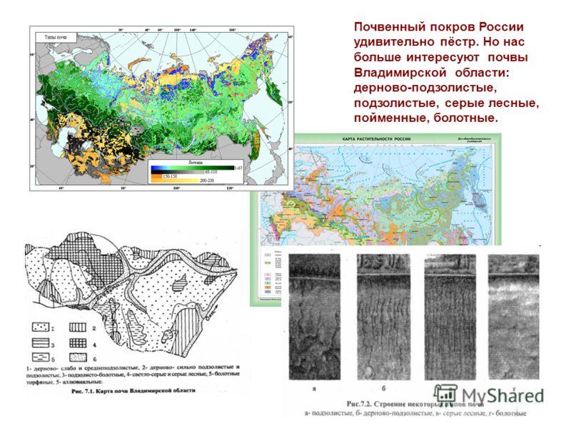 Почвенный покров России удивительно пёстр. Но нас больше интересуют почвы Владимирской области: дерново-подзолистые, подзолистые, серые лесные, пойменные, болотные.