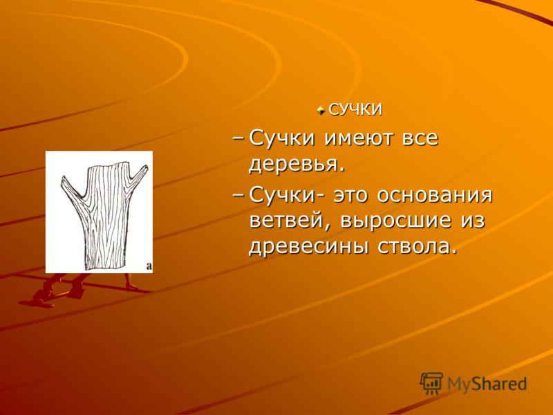 СУЧКИ –Сучки имеют все деревья. –Сучки- это основания ветвей, выросшие из древесины ствола.