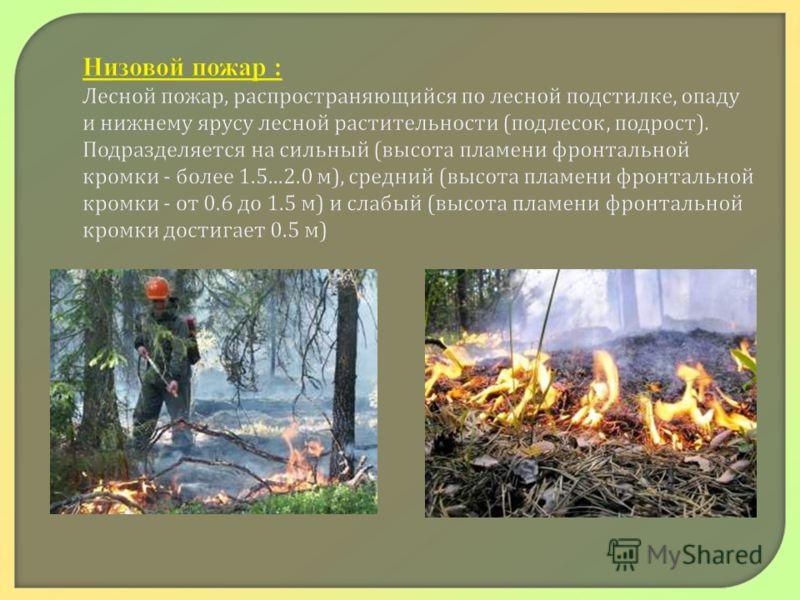 Низовой пожар : Лесной пожар, распространяющийся по лесной подстилке, опаду и нижнему ярусу лесной растительности ( подлесок, подрост ). Подразделяется на сильный ( высота пламени фронтальной кромки - более 1.5...2.0 м ), средний ( высота пламени фро
