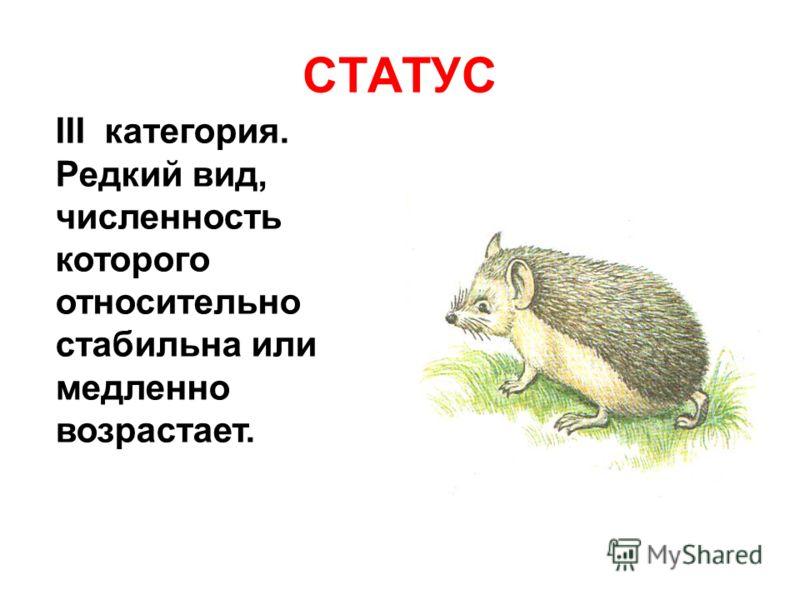 СТАТУС III категория. Редкий вид, численность которого относительно стабильна или медленно возрастает.