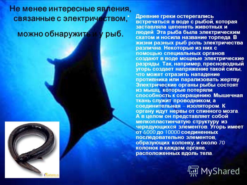 Не менее интересные явления, связанные с электричеством, можно обнаружить и у рыб. Древние греки остерегались встречаться в воде с рыбой, которая заставляла цепенеть животных и людей. Эта рыба была электрическим скатом и носила название торпеда. В жи