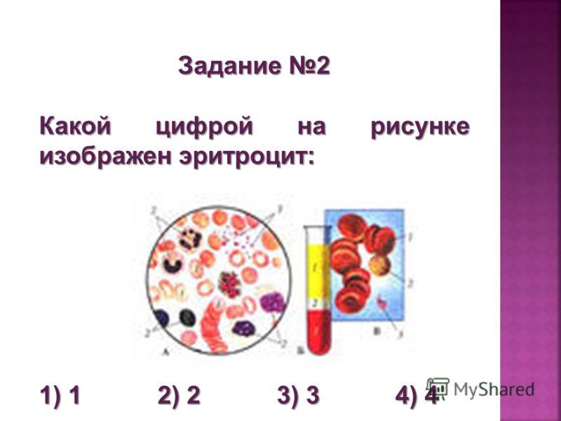 Задание 2 Какой цифрой на рисунке изображен эритроцит: 1) 1 2) 2 3) 3 4) 4