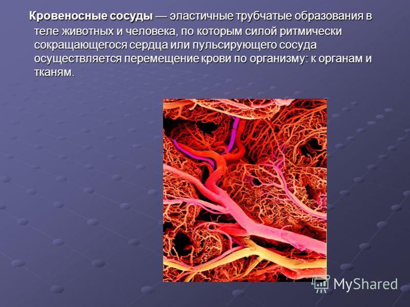 Кровеносные сосуды эластичные трубчатые образования в теле животных и человека, по которым силой ритмически сокращающегося сердца или пульсирующего сосуда осуществляется перемещение крови по организму: к органам и тканям. Кровеносные сосуды эластичны