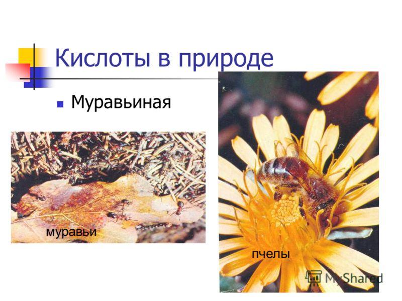 Кислоты в природе Муравьиная муравьи пчелы