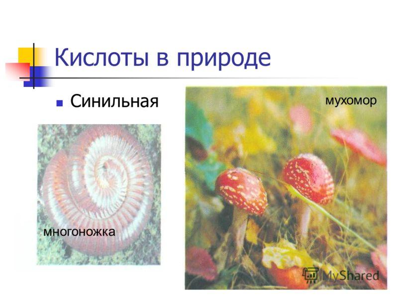 Кислоты в природе Синильная многоножка мухомор