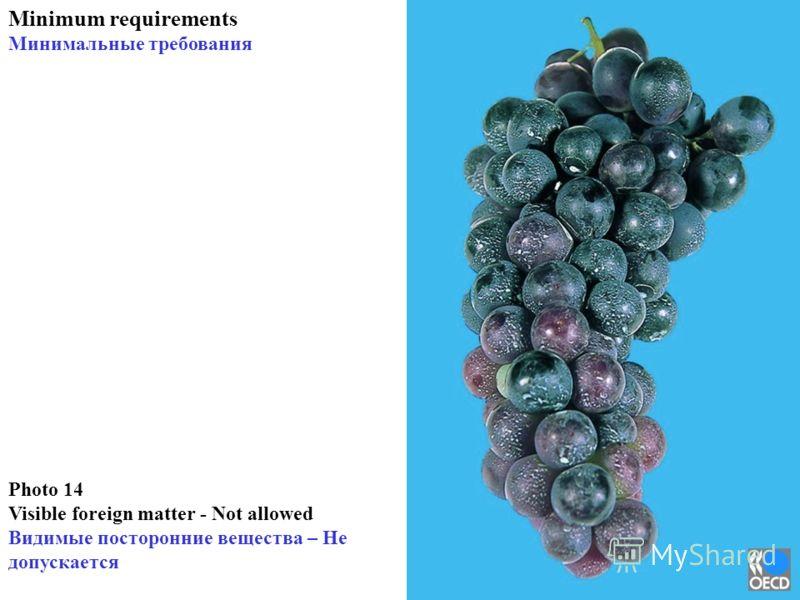 Photo 14 Visible foreign matter - Not allowed Видимые посторонние вещества – Не допускается Minimum requirements Минимальные требования