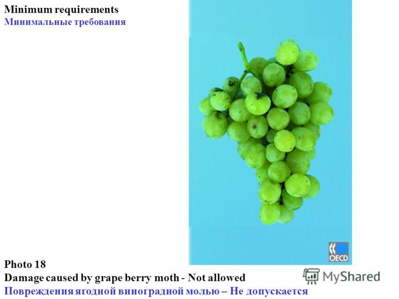 Photo 18 Damage caused by grape berry moth - Not allowed Повреждения ягодной виноградной молью – Не допускается Minimum requirements Минимальные требования