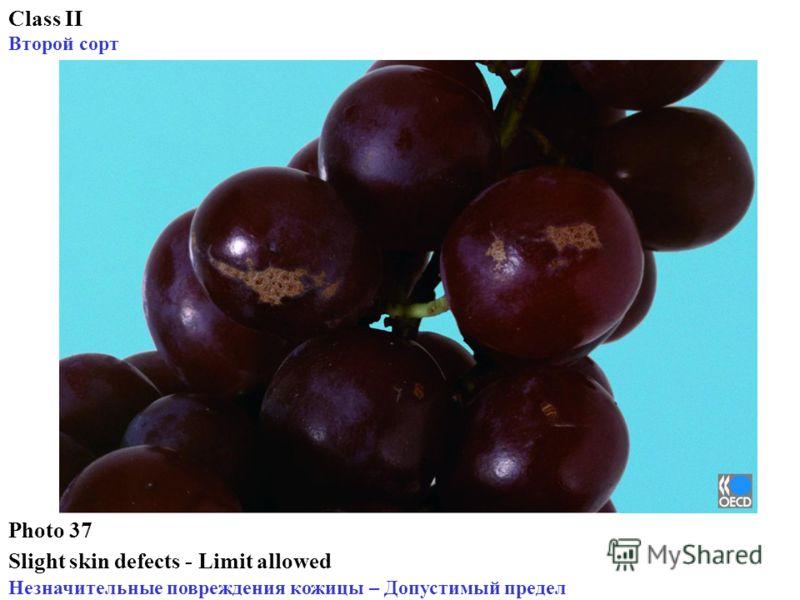 Photo 37 Slight skin defects - Limit allowed Незначительные повреждения кожицы – Допустимый предел Class II Второй сорт