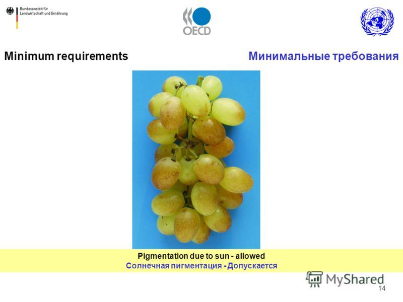 14 Pigmentation due to sun - allowed Солнечная пигментация - Допускается Minimum requirementsМинимальные требования