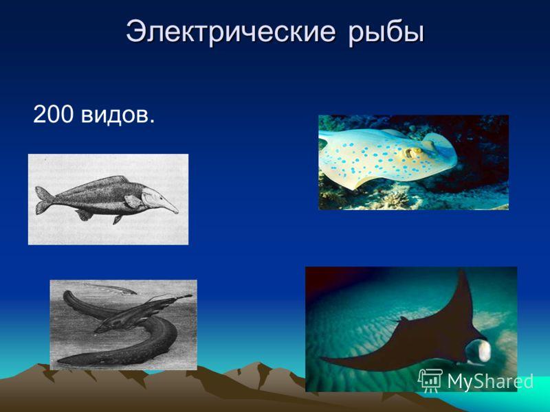 Электрические рыбы 200 видов.