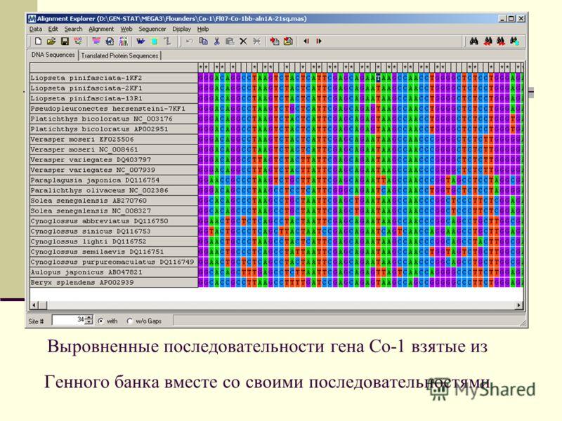 Выровненные последовательности гена Со-1 взятые из Генного банка вместе со своими последовательностями