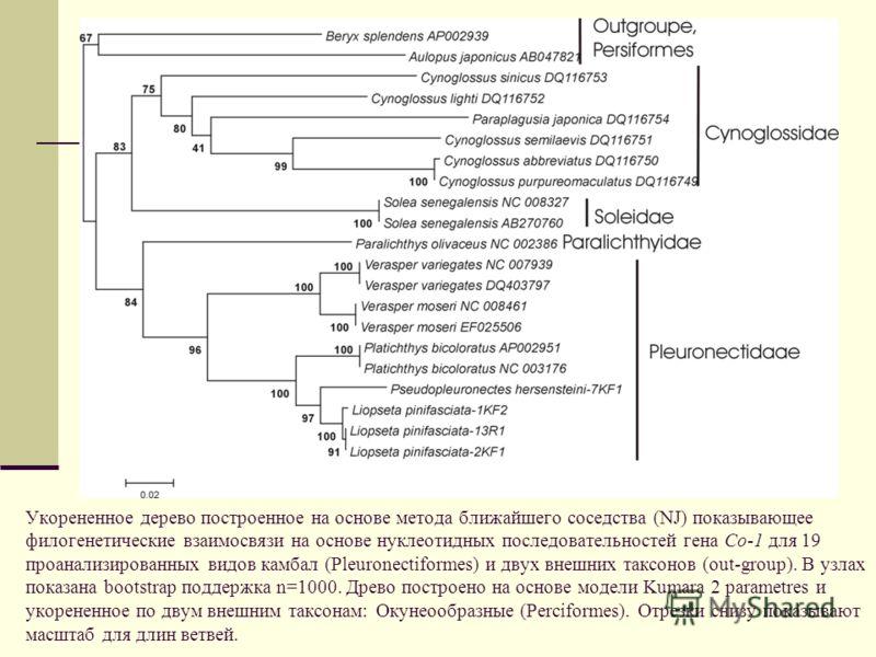 Укорененное дерево построенное на основе метода ближайшего соседства (NJ) показывающее филогенетические взаимосвязи на основе нуклеотидных последовательностей гена Co-1 для 19 проанализированных видов камбал (Pleuronectiformes) и двух внешних таксоно