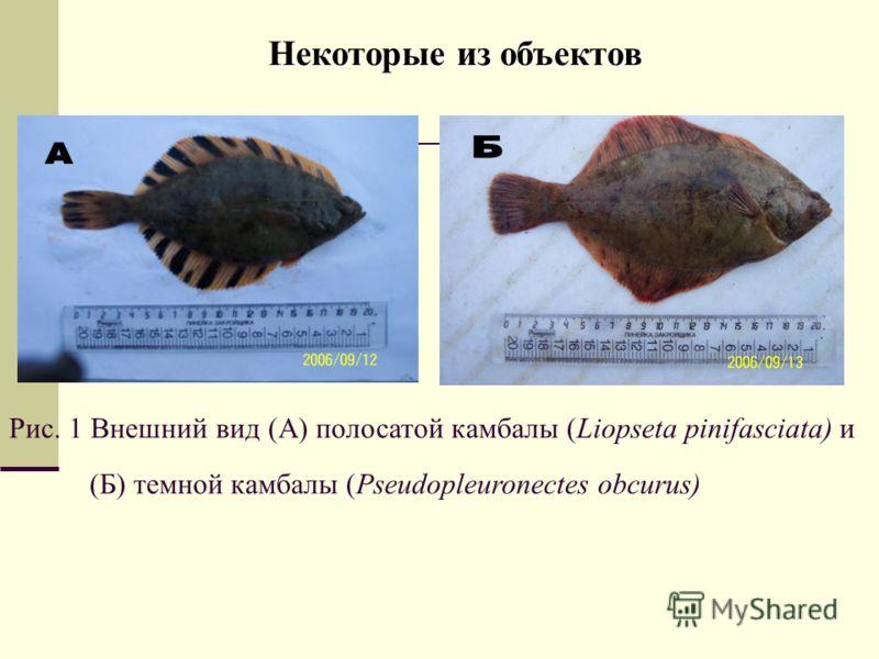 Некоторые из объектов Рис. 1 Внешний вид (А) полосатой камбалы (Liopseta pinifasciata) и (Б) темной камбалы (Pseudopleuronectes obcurus)