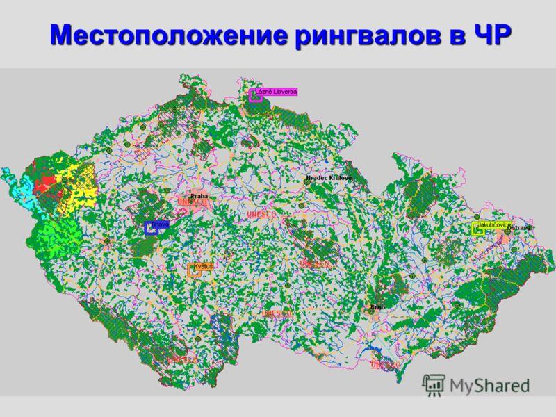 Местоположение рингвалов в ЧР