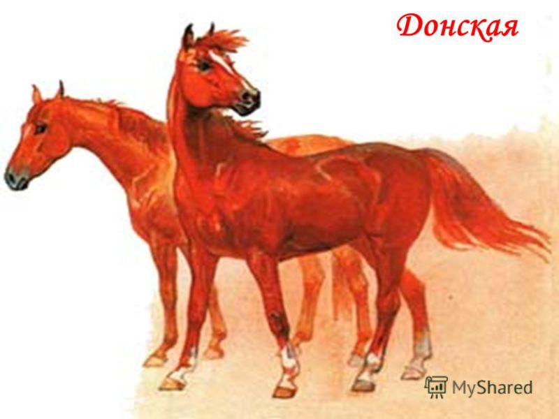 Донская