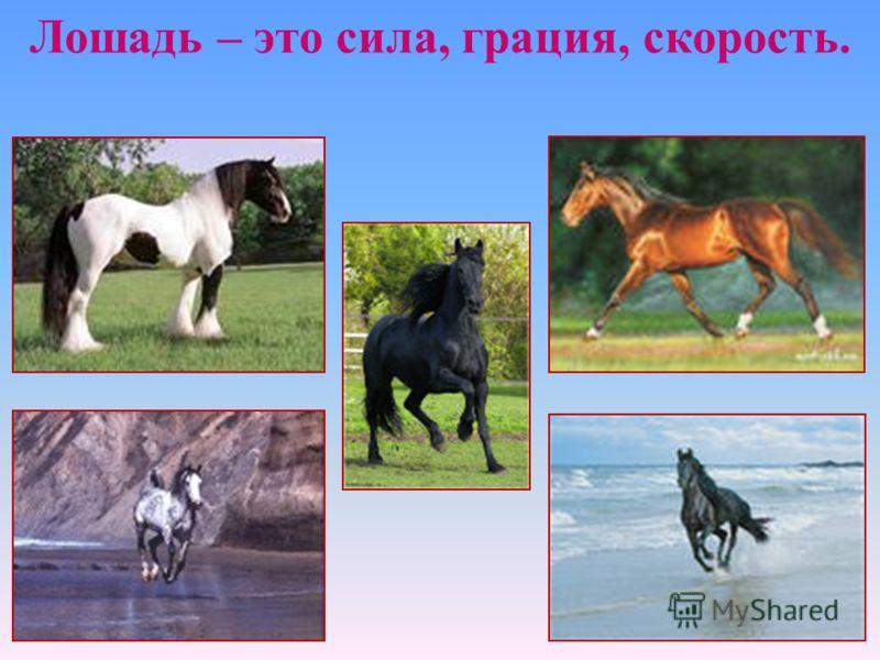 Лошадь – это сила, грация, скорость.