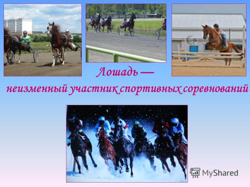 Лошадь неизменный участник спортивных соревнований
