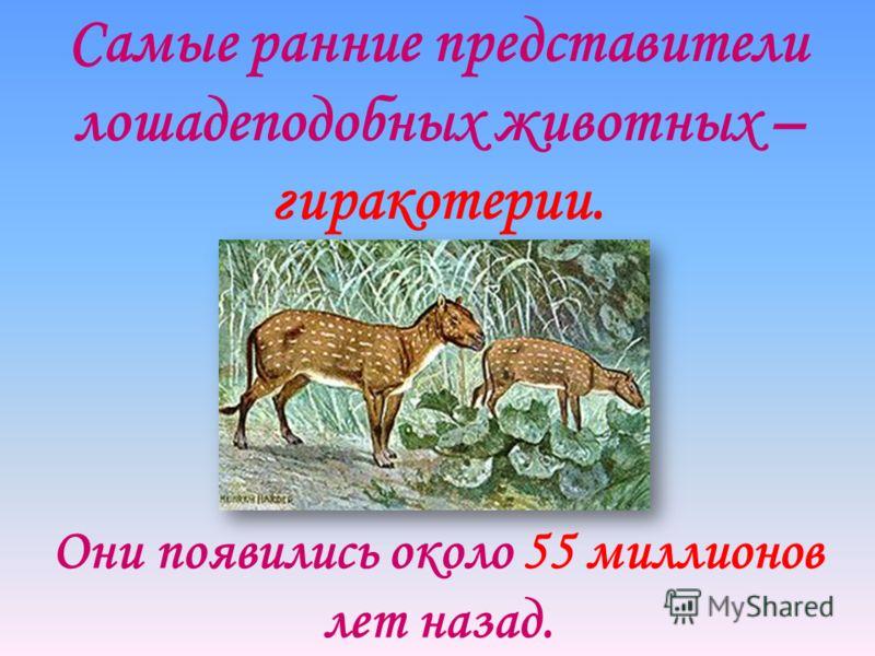 Самые ранние представители лошадеподобных животных – гиракотерии. Они появились около 55 миллионов лет назад.