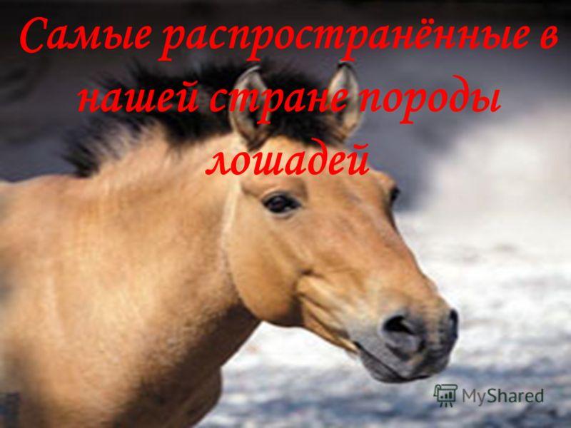 Самые распространённые в нашей стране породы лошадей