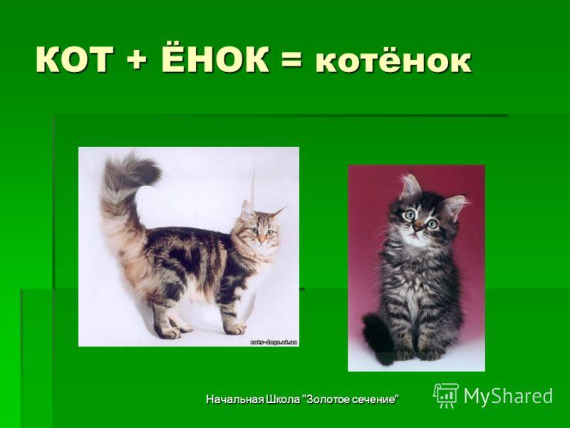Начальная Школа Золотое сечение КОТ + ЁНОК = котёнок