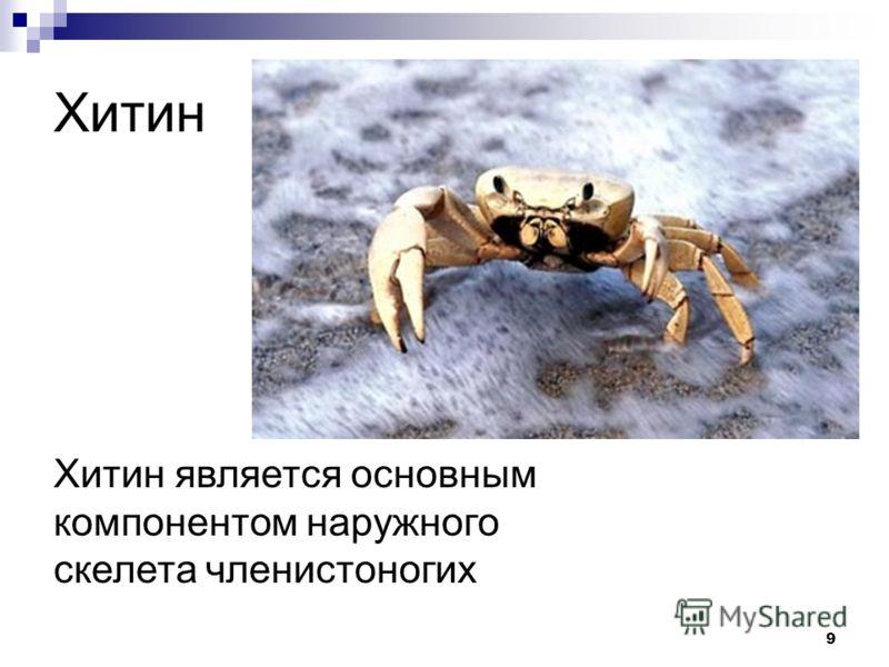 9 Хитин Хитин является основным компонентом наружного скелета членистоногих