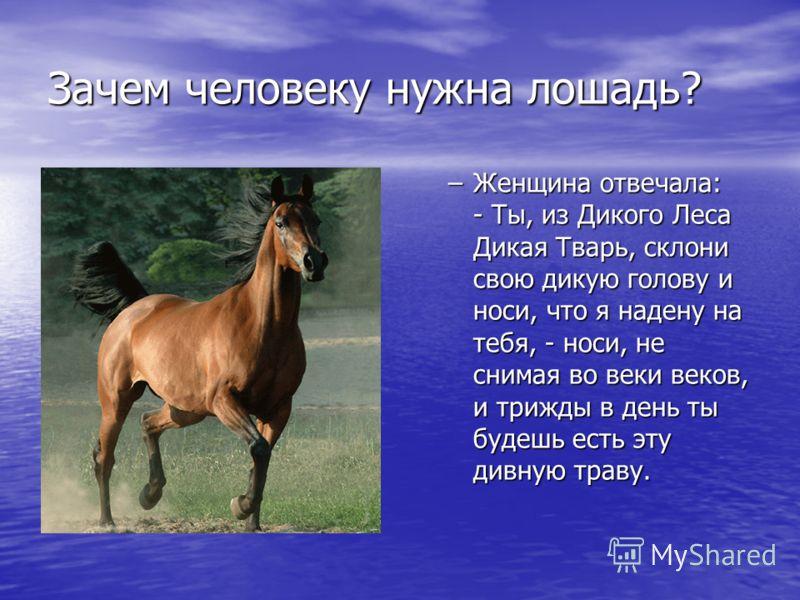 Зачем человеку нужна лошадь? –Женщина отвечала: - Ты, из Дикого Леса Дикая Тварь, склони свою дикую голову и носи, что я надену на тебя, - носи, не снимая во веки веков, и трижды в день ты будешь есть эту дивную траву.