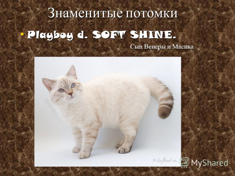Playboy d. SOFT SHINE. Playboy d. SOFT SHINE. Сын Венеры и Масика Сын Венеры и Масика