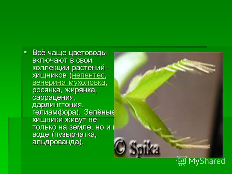 Всё чаще цветоводы включают в свои коллекции растений- хищников (непентес, венерина мухоловка, росянка, жирянка, саррацения, дарлингтония, гелиамфора). Зелёные хищники живут не только на земле, но и в воде (пузырчатка, альдрованда). Всё чаще цветовод