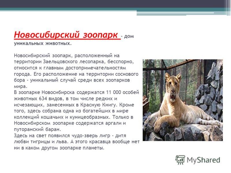 Новосибирский зоопарк - дом уникальных животных. Новосибирский зоопарк, расположенный на территории Заельцовского лесопарка, бесспорно, относится к главным достопримечательностям города. Его расположение на территории соснового бора - уникальный случ