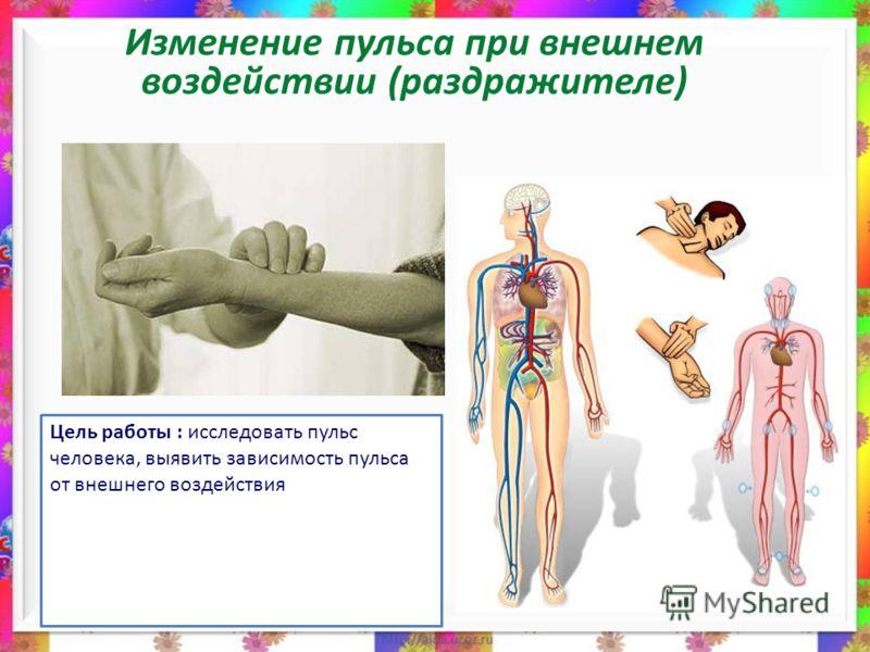 Изменение пульса при внешнем воздействии (раздражителе) Цель работы : исследовать пульс человека, выявить зависимость пульса от внешнего воздействия