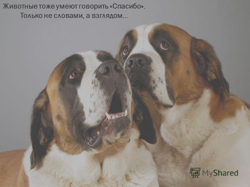Животные тоже умеют говорить «Спасибо». Только не словами, а взглядом…