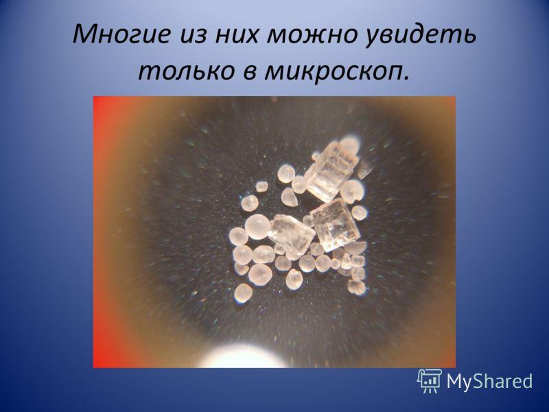 Многие из них можно увидеть только в микроскоп.