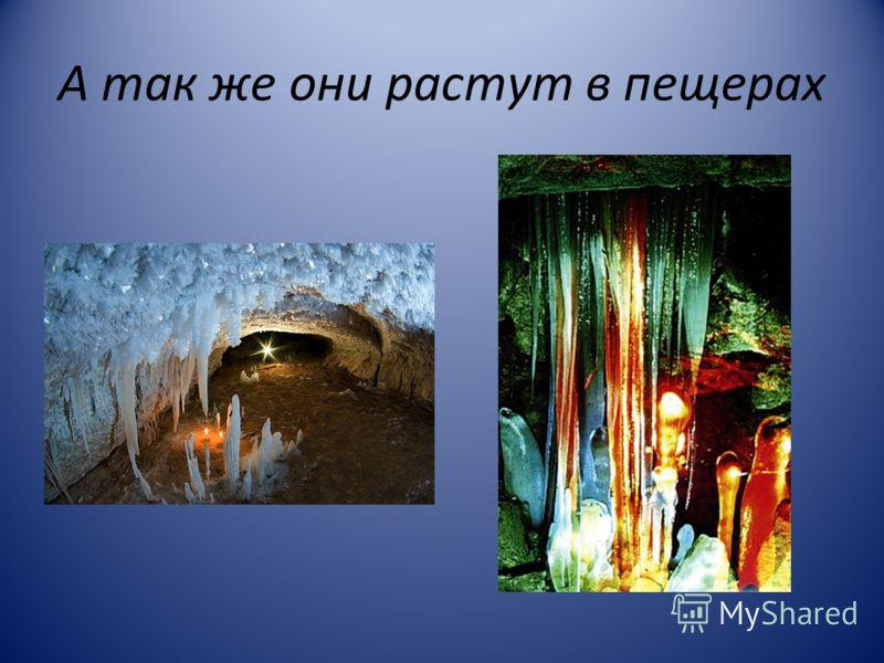 А так же они растут в пещерах