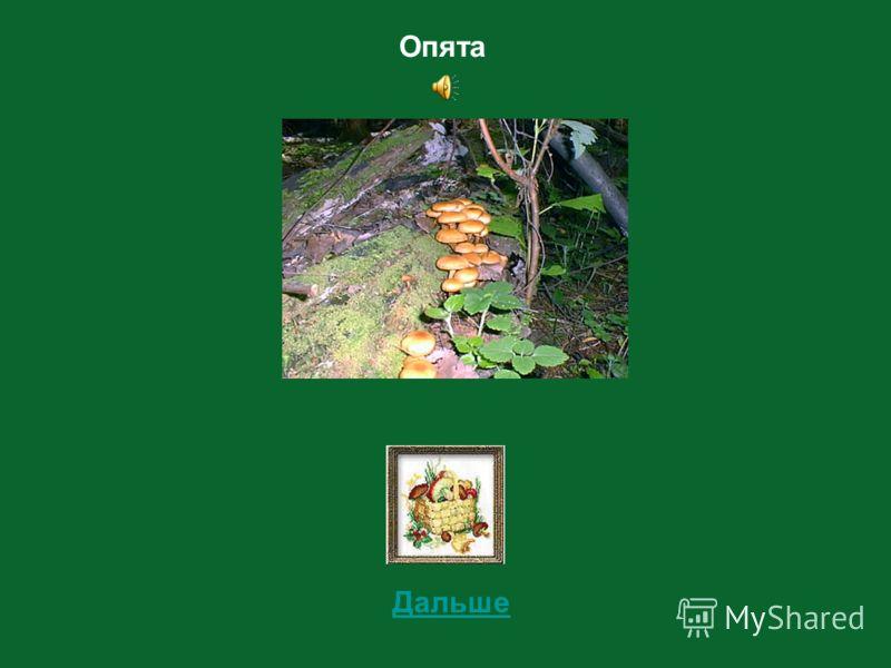 3 Определи съедобный этот гриб или не съедобный?