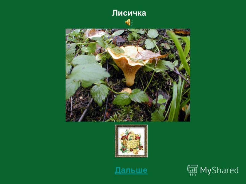 5 Определи съедобный этот гриб или несъедобный?