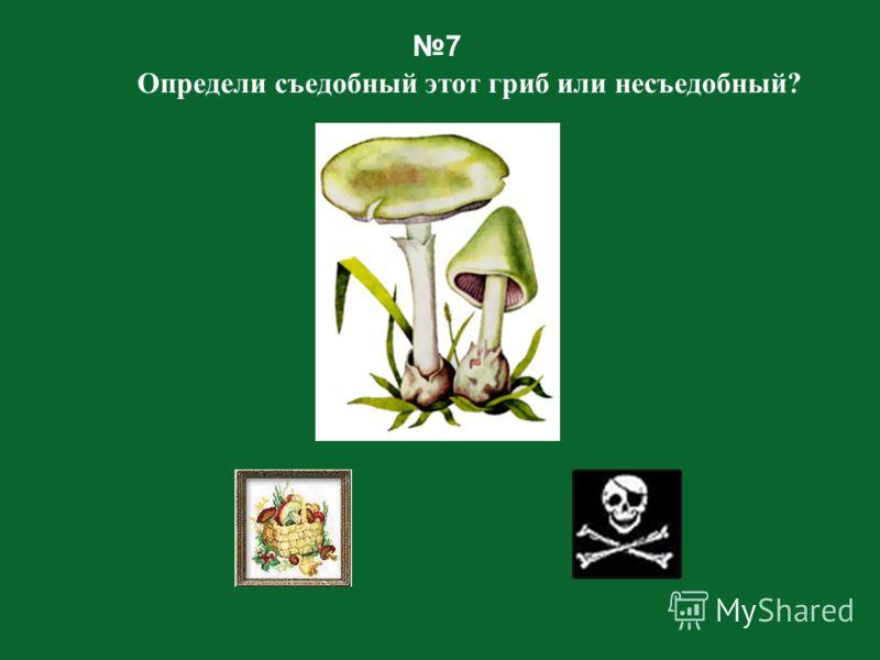 Назад Осторожно! Эти грибы могут тебя обмануть!