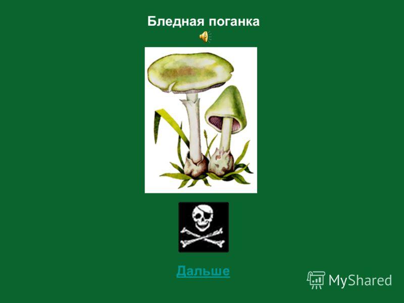 7 Определи съедобный этот гриб или несъедобный?