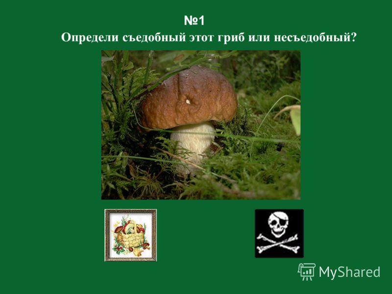 Ребята! Сейчас мы с вами отправимся в лес за грибами! Берем корзинки - и внимательно смотрим под ноги! Поднимаем каждый листочек, каждую былинку! Вдруг под ней прячется красивый и вкусный гриб? Только нужно быть осторожными! Кладите в корзинку только