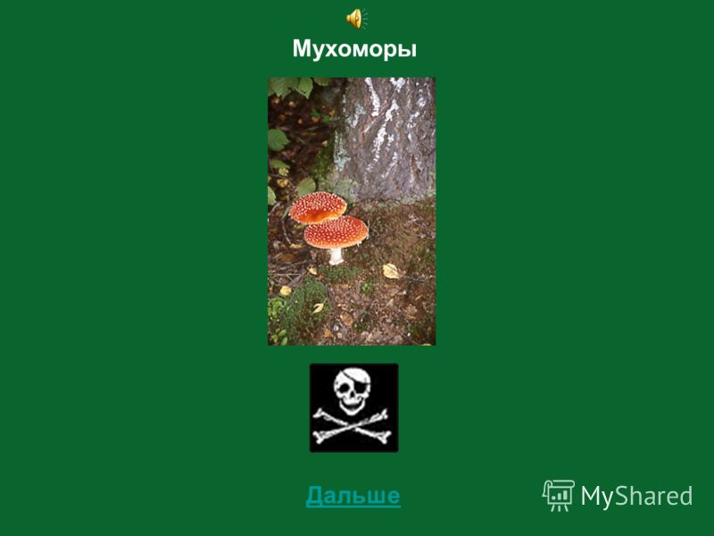 2 Определи съедобный этот гриб или несъедобный?