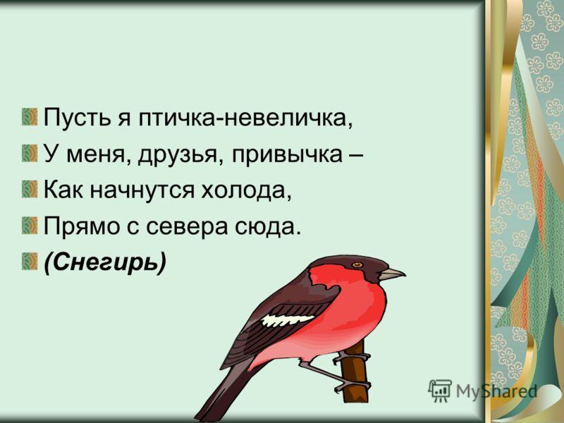 Пусть я птичка-невеличка, У меня, друзья, привычка – Как начнутся холода, Прямо с севера сюда. (Снегирь)